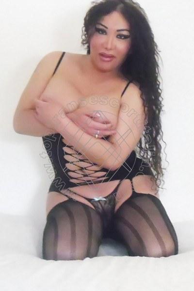 Miranda PERUGIA 3450801564